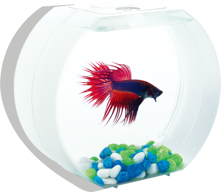 Betta O - Desktop Aquariums suppliers & manufacturers
